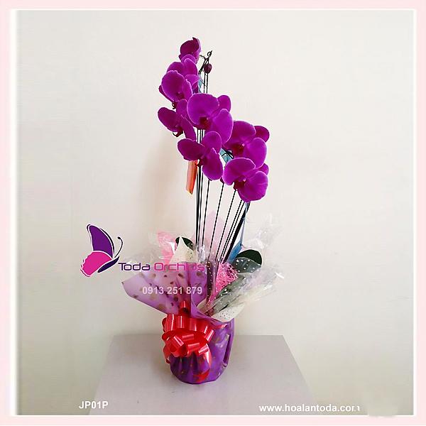 hoa lan ho diep nhat ban