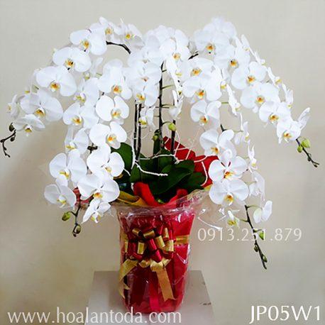 chau hoa lan kieu nhat 5 canh