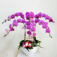 Chậu hoa lan hồ điệp tím – Niềm hạnh phúc