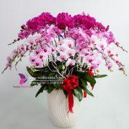 Hoa Lan hồ điệp Tết quà biếu tết, quà tặng tết sang trọng hơn vạn lời chúc