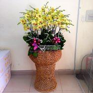 Chậu hoa tặng đối tác khách hàng trong dịp năm mới