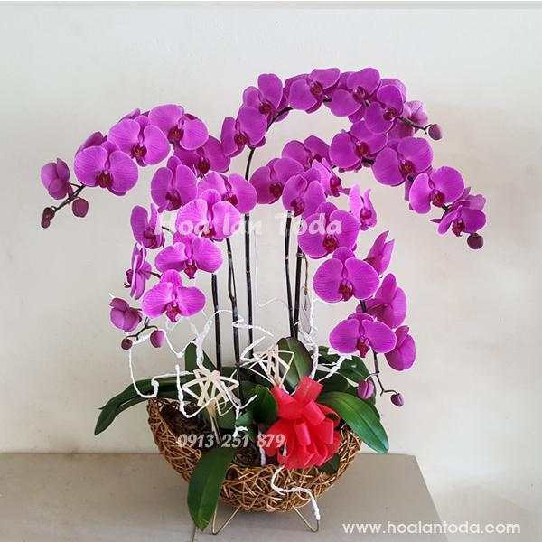 hoa tang me ngay 8 3