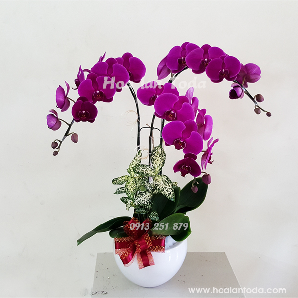 hoa tang ngay 8 3