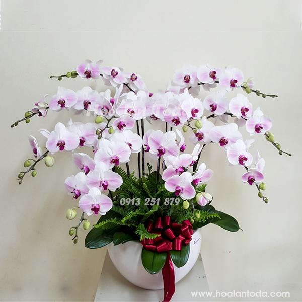Hoa hong tinh yeu