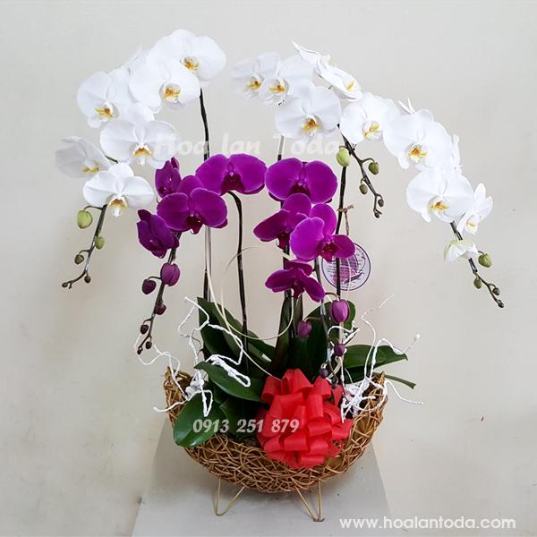 hoa tặng mẹ ngày phụ nữ việt nam 201/10