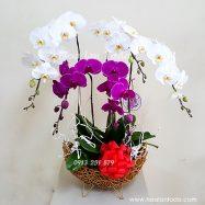Hoa Tặng Sếp Nữ Ngày Quốc Tế Phụ Nữ 8 3