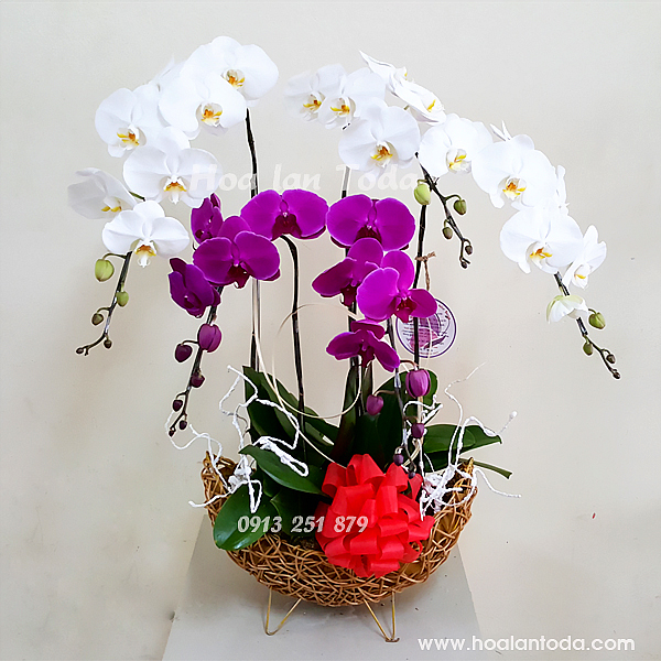 hoa tang sep nu ngay quoc te phu nu 8 3