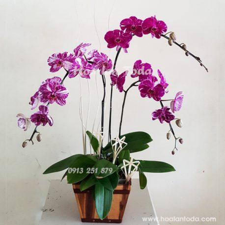 hoa tang sinh nhat vo y nghia