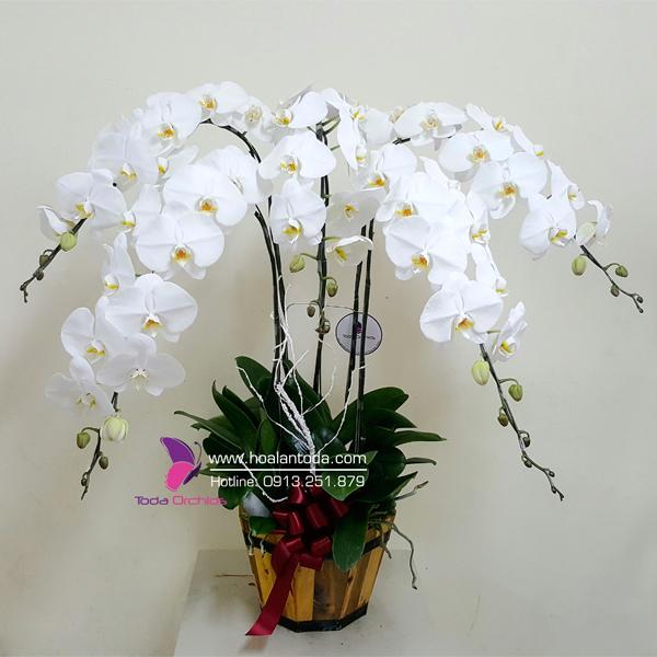 chau hoa lan ho diep trang 6 canh