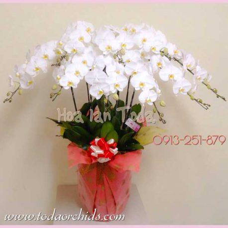 chau hoa lan ho diep trang kieu nhat