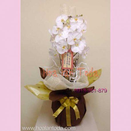 chau hoa lan kieu nha tinh dau kho phai