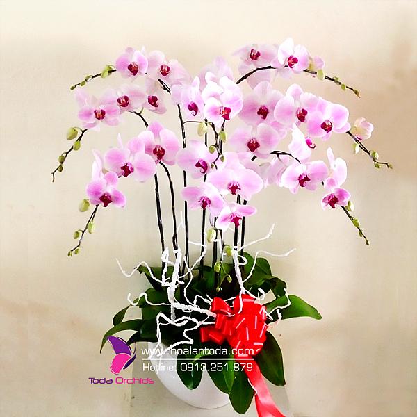 hoa tang thay co ngay 20 11