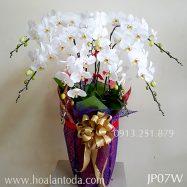 Chậu hoa lan kiểu nhật hồ điệp trắng 7 cành