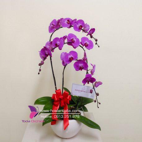hoa tang sinh nhat cong vong tinh yeu