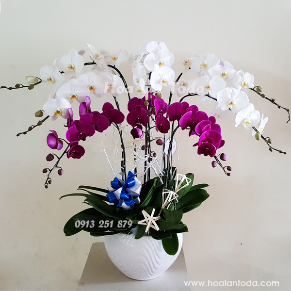 chau hoa lan tuoi tham tang me ngay 20 10