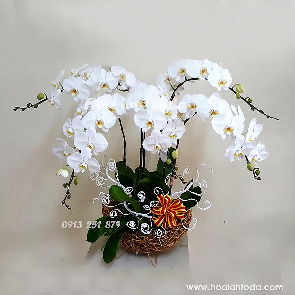 hoa tang ngay 20 thang 10