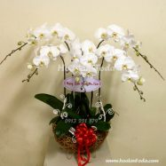 hoa tang vo ngay 20/10 lang mang va hanh phuc
