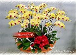hoa lan chung ngay tet