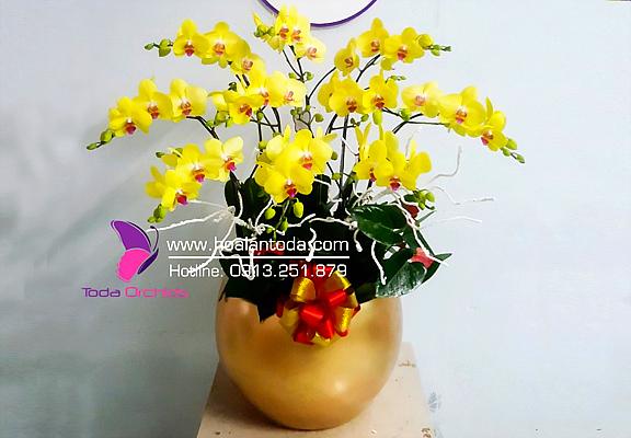 chung hoa lan tet