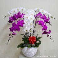 hoa tang sinh nhat me chong