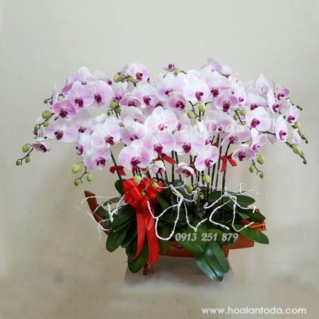 hoa chung trong nha ngay tet