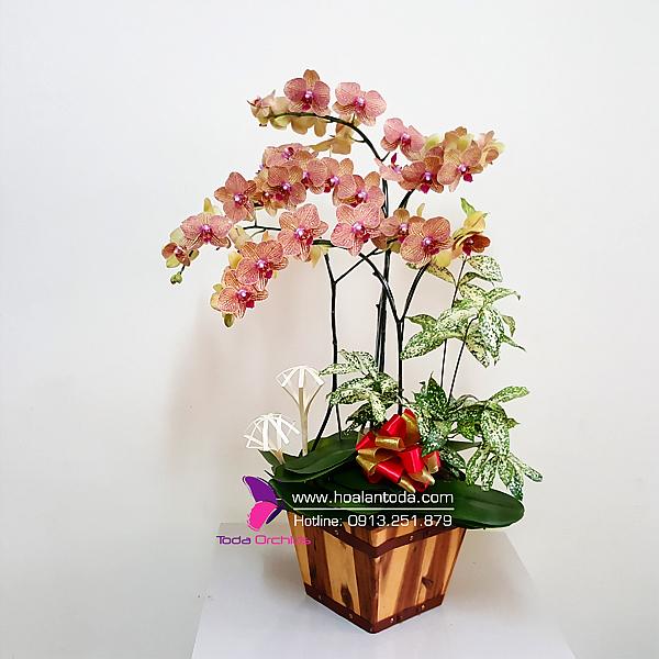 chau hoa lan tang ngay 20 10 y nghia