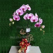 chau hoa lan tim tang nguoi yeu ngay sinh nhat y nghia