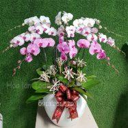 chau hoa lan trang tri phong khach de sang trong