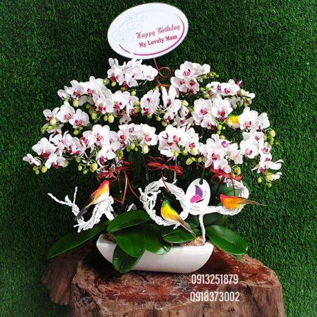 lan ho diep mini chau hoa nho de ban lam viec van phong