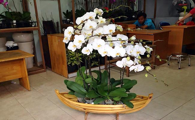 hoa tang khai truong