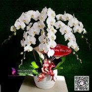 Hoa Tặng Sinh Nhật Chồng – Hoa Chức Mừng Sinh Nhật Chồng