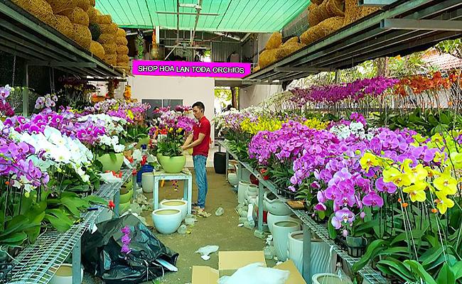 cua hang ban hoa lan ho diep dep gia re tphcm