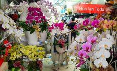 Toda Orchids Shop Bán Hoa Lan Hồ Điệp Đẹp Giá Rẻ Uy Tín TP.HCM