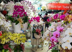 shop hoa lan ho diep dep gia re tphcm