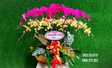 Đặt Hoa Khai Trương Tại Shop Hoa Toda Orchids Quận 2 TPHCM