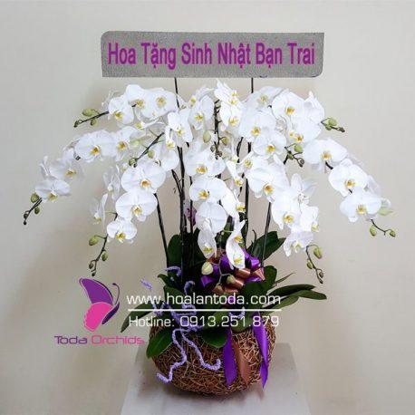 hoa tang sinh nhat ban trai