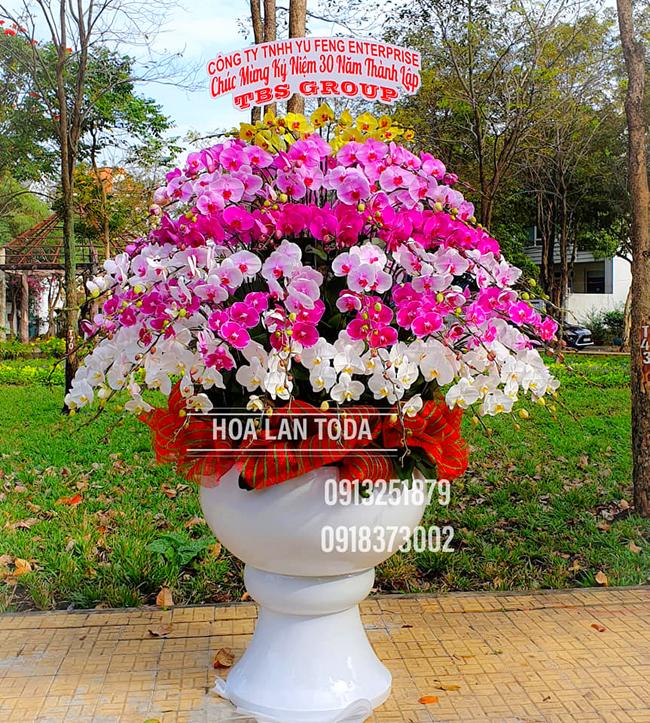 gia ban hoa lan tet lan ho diep tet