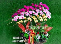hoa lan tet dam bao dep hoa to chat luong