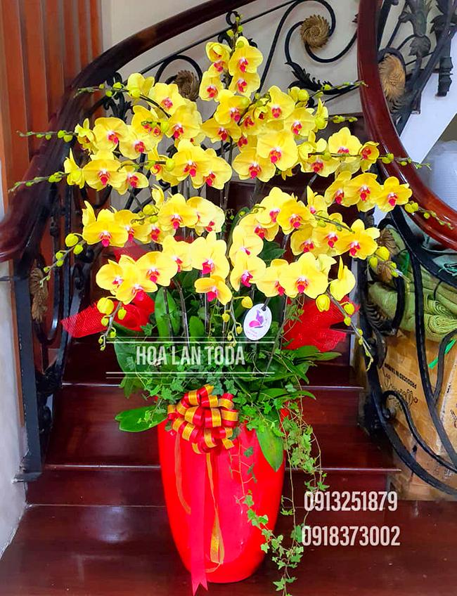 hoa lan chung tet