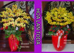 lan ho diep hoa choi tet hoa chung tet hoa ngay tet dep lau tan