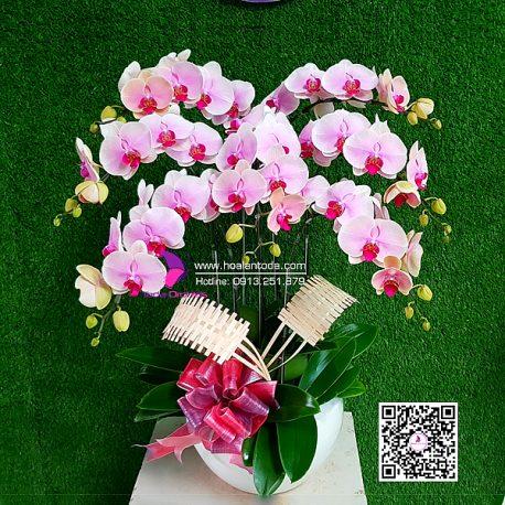 hoa tang vo ngay 8 3