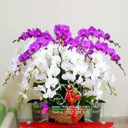 Toda Orchids Shop Hoa Lan Hồ Điệp Uy Tín Quận 1 TP.HCM