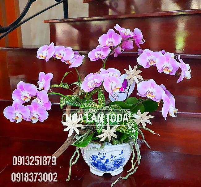 toda orchids shop ban hoa tuoi dep gia re quan binh tan tphcm